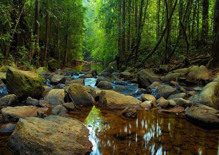 نتيجة بحث الصور عن محمية غابة سينهاراجا