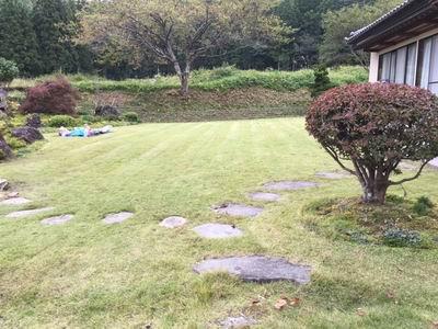 我が家の高麗芝の風景