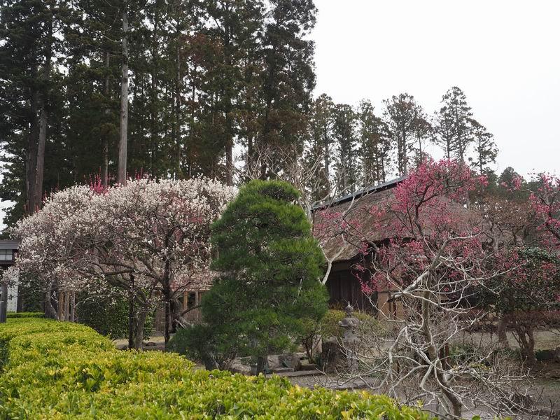 松島園通院の冬の風景