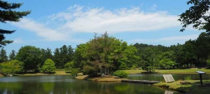 夏の毛越寺の庭園の風景写真