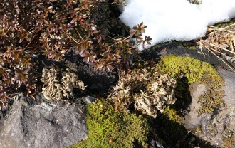 庭のイワヒバの自生の冬の写真をxt3で撮影した