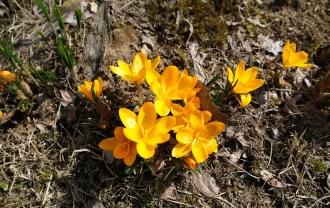 x-t3のレビュー画質の評価庭の花の写真