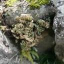 x-t3レビュー画質の評価庭のイワヒバ3月の風景写真2