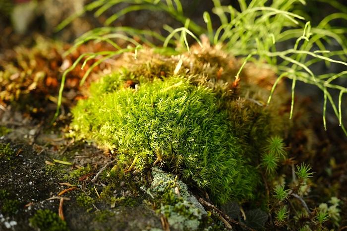 杉苔の風景写真