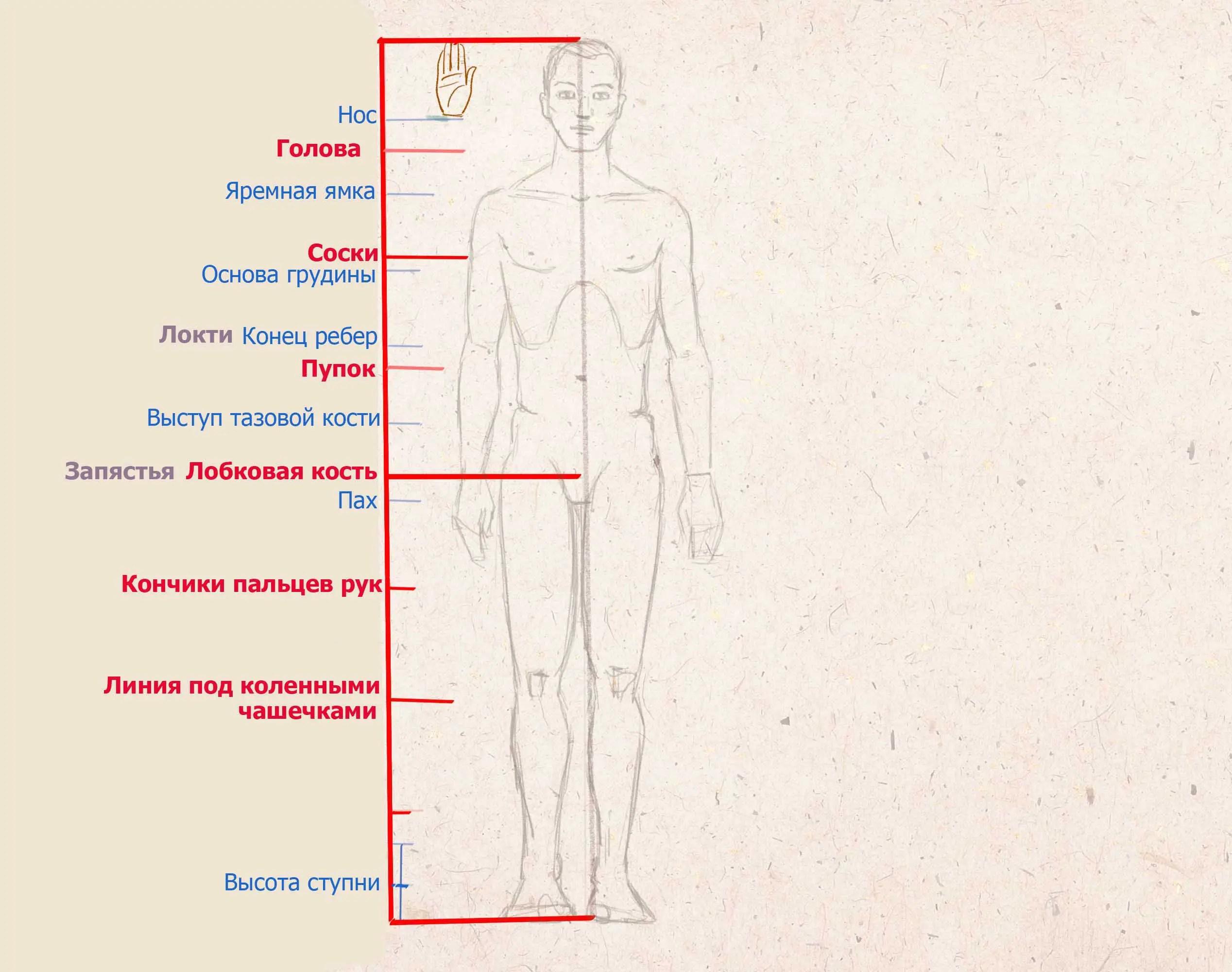 Henkilön kehon mittasuhteet kämmenissä