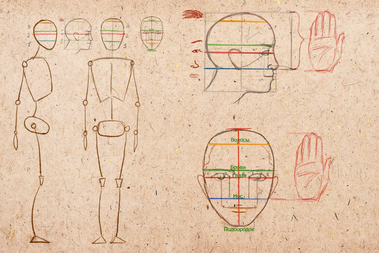 Pään mittasuhteet