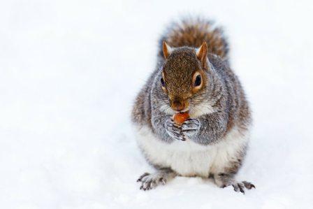 寒い時や冷え性に!カイロや手袋がない時に冷たい手を温める方法5選