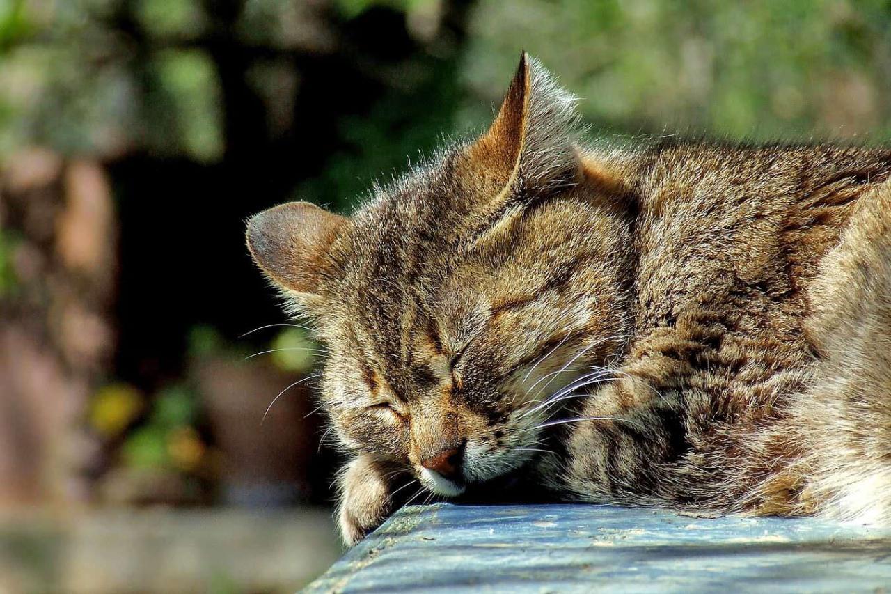 日中の眠気対策!昼間にウトウトして眠くならないための方法4選