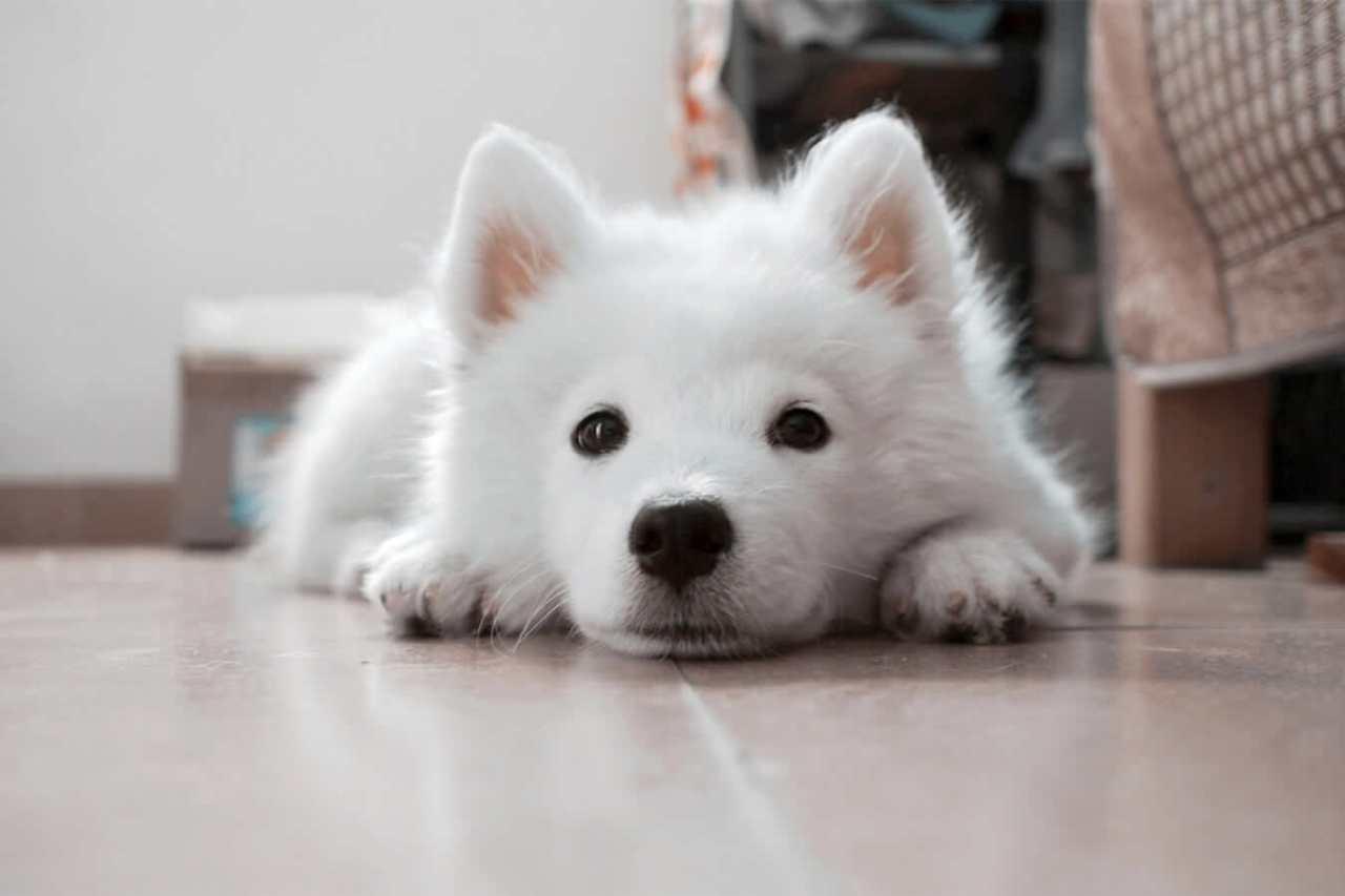上手な練習をして覚えさせる!犬の鼻パクの教え方のコツ・手順4選