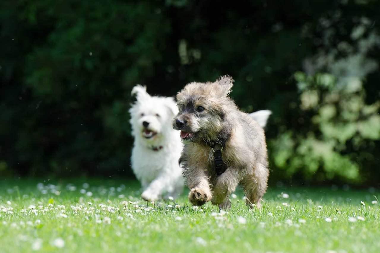 心身ともに効果的!ペットを飼うことでの健康や精神への5つのメリット