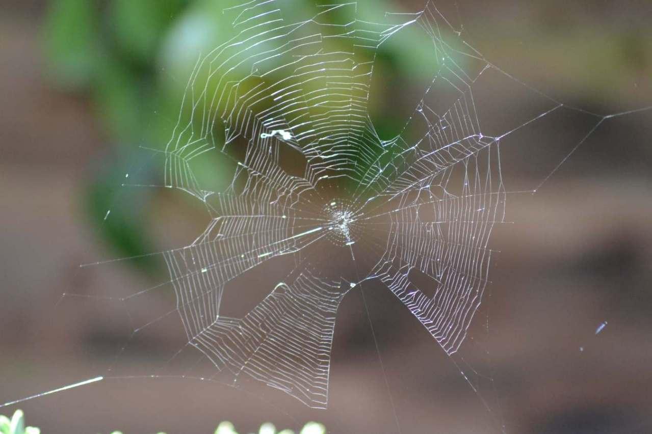 除去・退治する!クモの巣を張らせないように防ぐための予防対策3選
