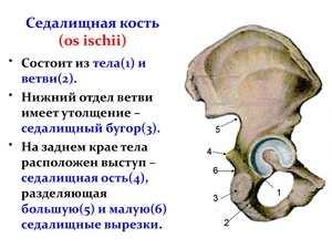 Болит седалищная кость возможные причины и методы лечения