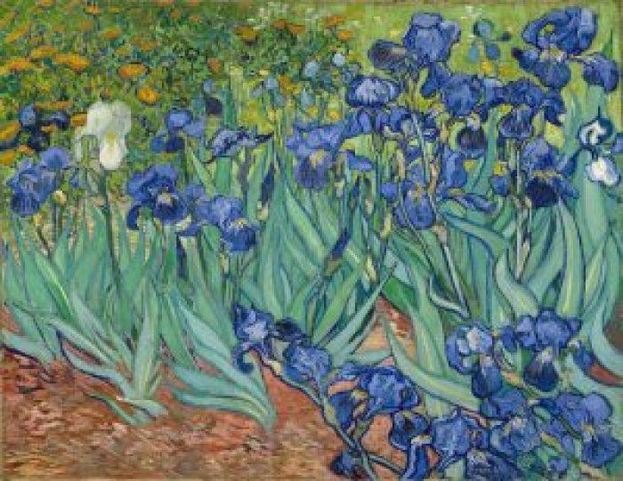 Van Gogh. Irises.