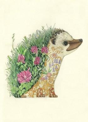Daniel Mackie, Hedgehog