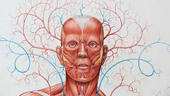 Book Review Basic Human Anatomy An Essential Visual Guide For