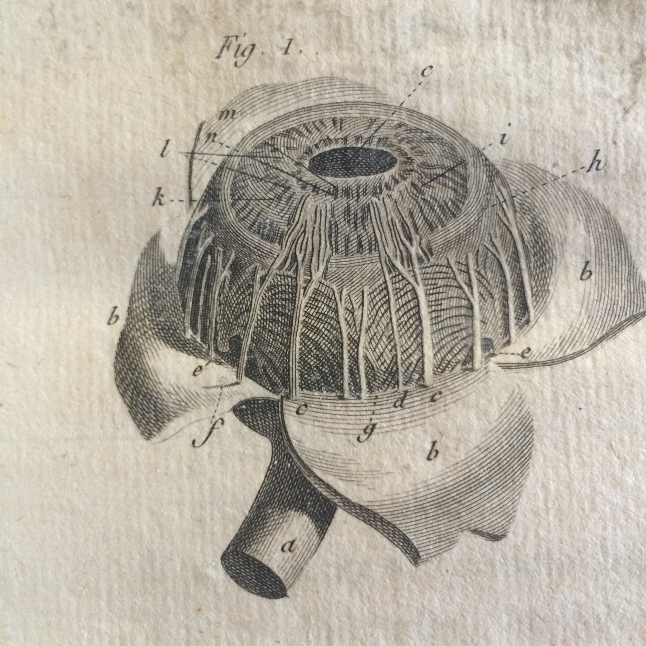 The Eye As Art Anatomy And Vision In The 18th Century