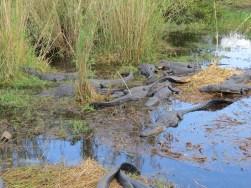 10-gators