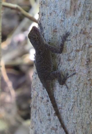 20-lizard