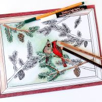 Winter Cardinals Christmas Coloring Page for Adults