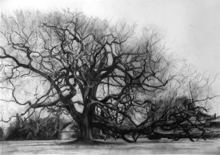 43 Arborealists, 6 guests plus Paul Nash put trees in the limelight