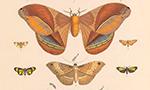 Bibliometria: A Nova Ameaça Para Taxonomia Zoológica?