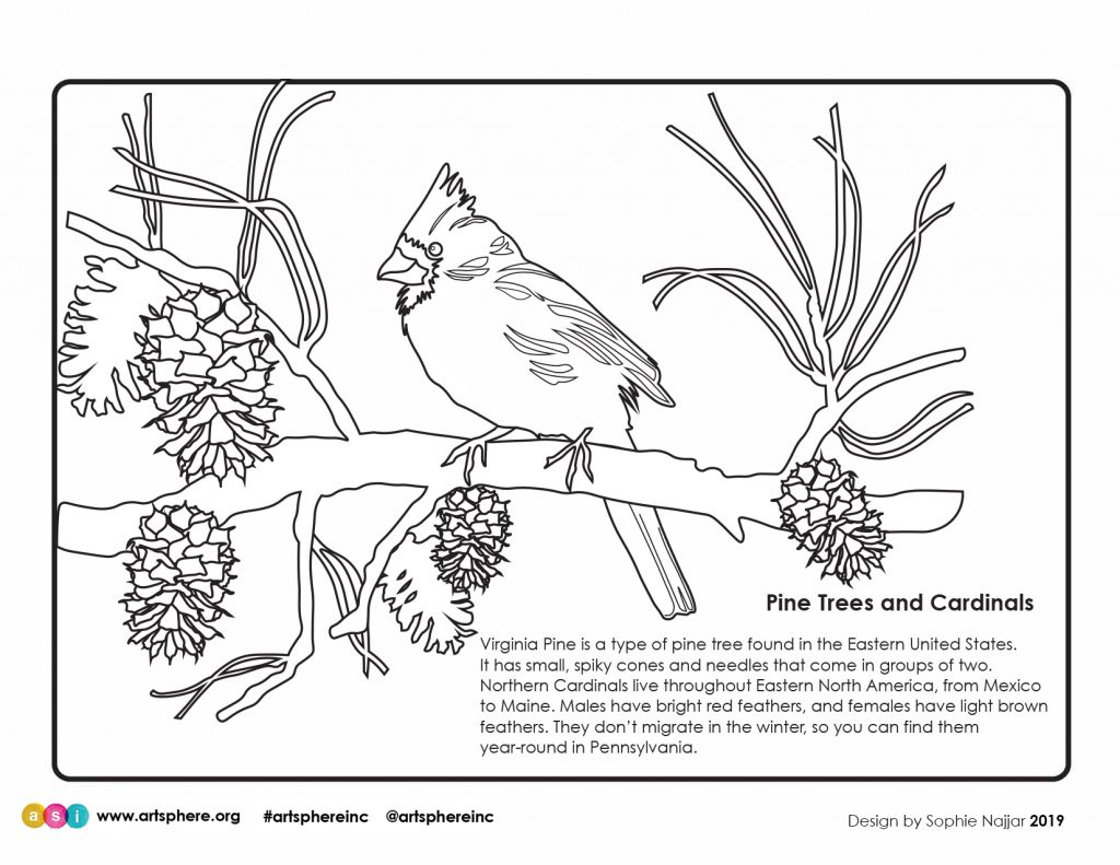 Free Cardinal Coloring Sheet To Celebrate Winter Art Sphere Inc