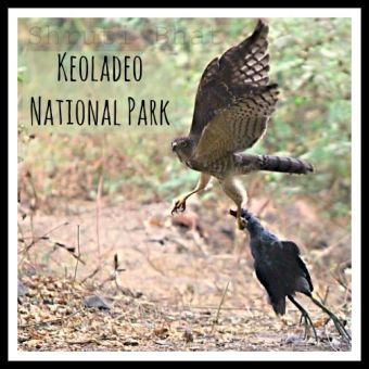 Bharatpur Bird Sanctuary , Keoladeo National Park, Rajasthan
