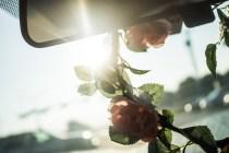 light-of-day-3