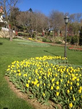 Emirgan Park Tulips