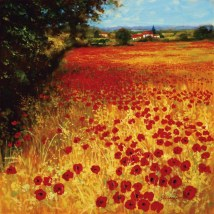 Field Of Red And Gold