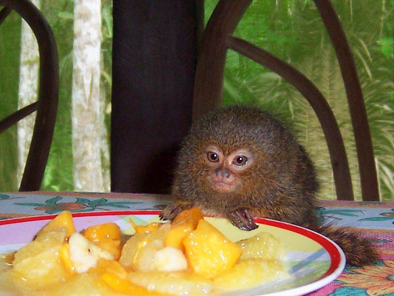 Kiki enjoying her breakfast
