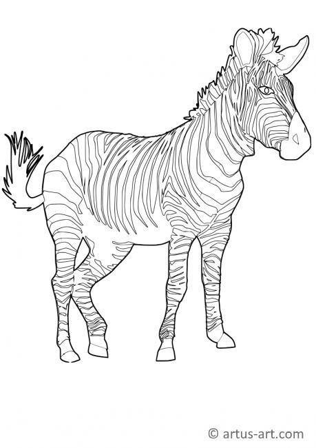 Zebra Ausmalbild » Gratis Zebra Malvorlage zum Ausdrucken