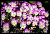 photo_S18-15-resized