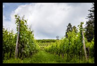 Alsace_2016-6-resized