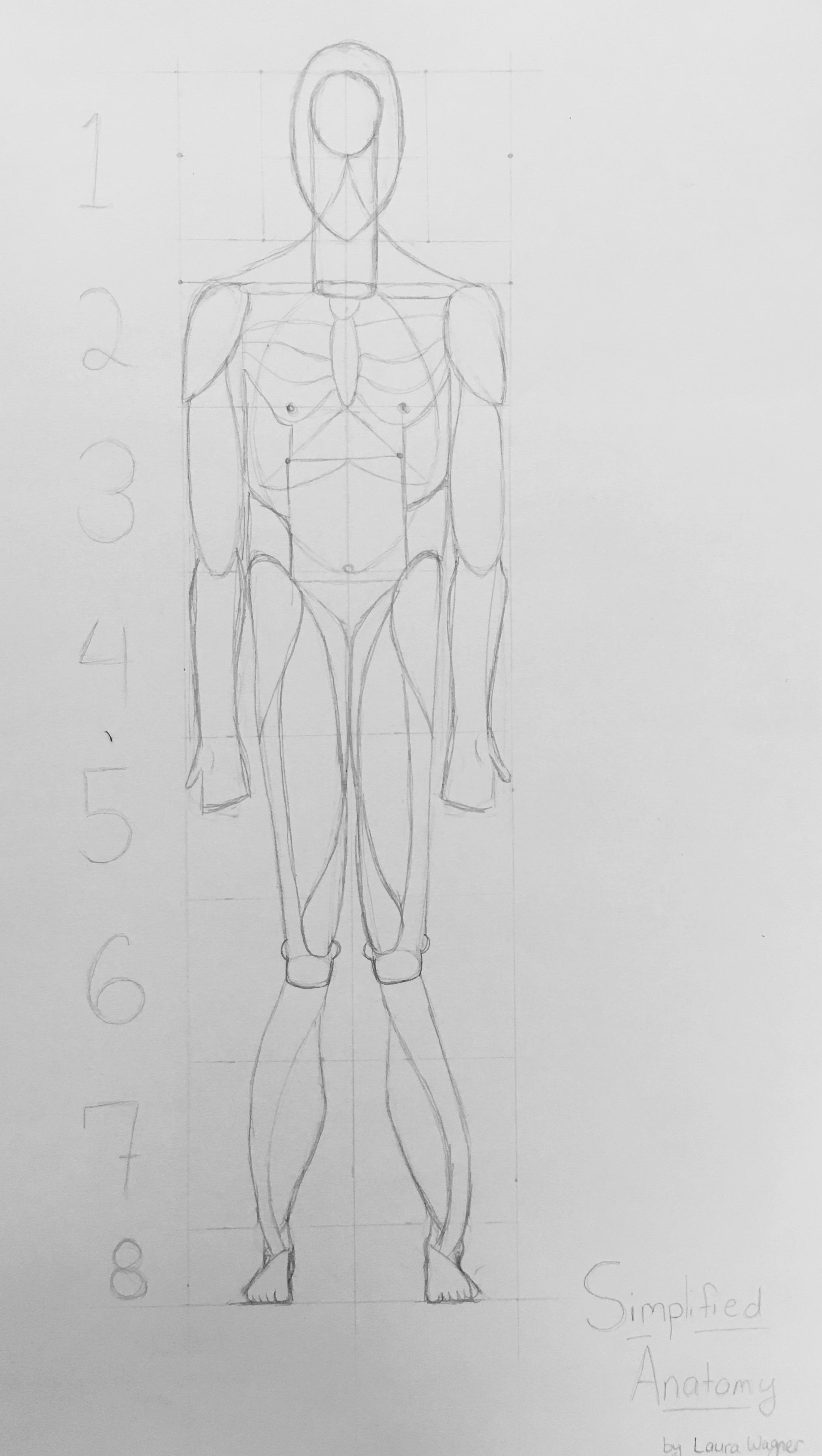 Understanding Human Anatomy Simplified