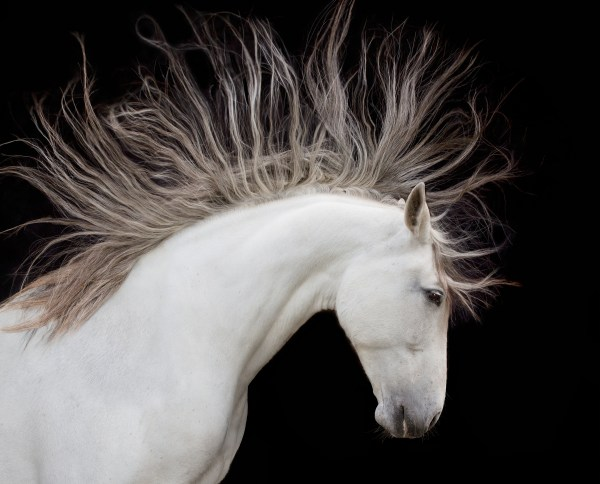 Horse Art Wolfe Photography