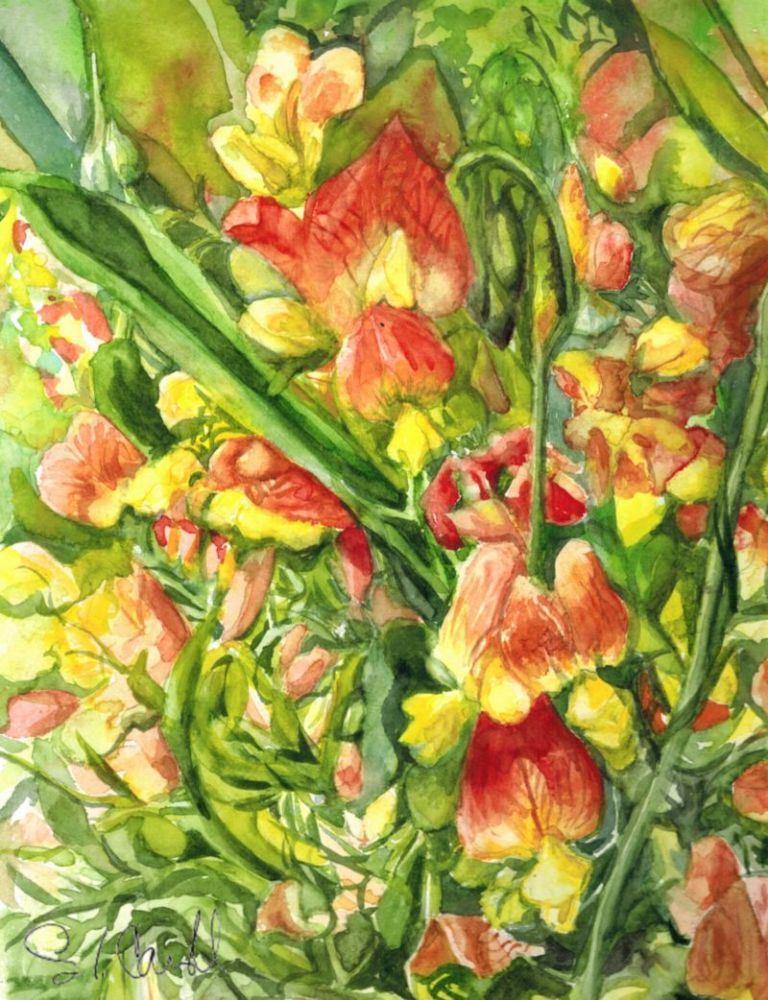 painting of orange and yellow wild sweetpeas