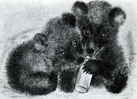 Картинки к рассказу чарушина мишки