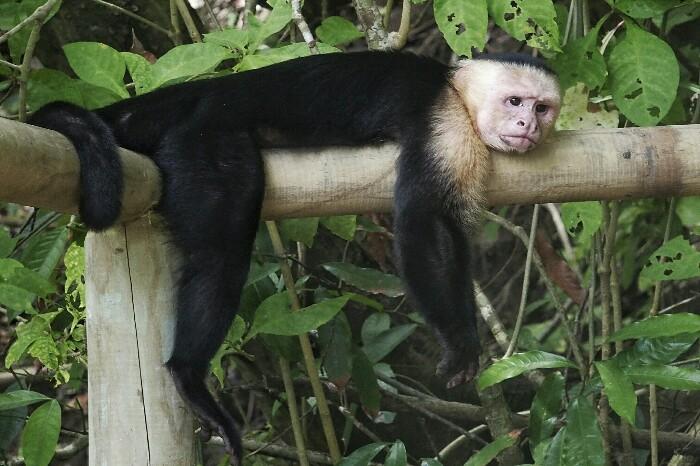 Manuel Antonio. Costa Rica.