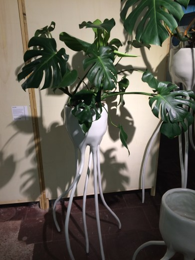 Monstera Magnifica & Monstera Fugiens