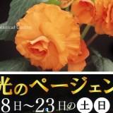 広島市植物公園の夜間開園 花と光のページェント(~9月23日)