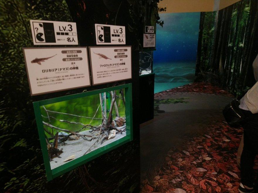 化ケモノ展 マリホ水族館