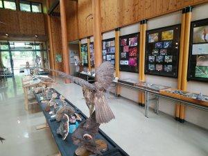 おおの自然観察の森 観察センター