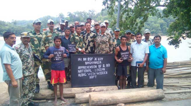 BSF Nabs Bangladeshi Smugglers with Wooden Logs, seized Cattles