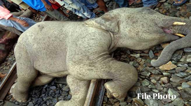 Elephants on Track hit by Train engine near Jamunamukh