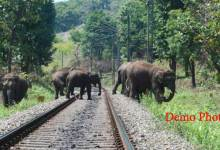 Photo of Kanyakumari–Dibrugarh Vivek Express Hit Elephants near Jugijan