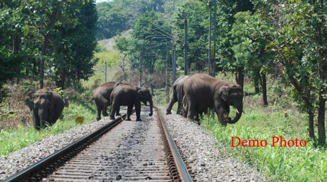 Kanyakumari–Dibrugarh Vivek Express Hit Elephants near Jugijan