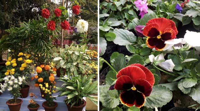 Flowers bloom in Hailakandi town