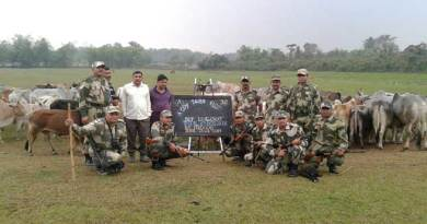 BSF Seizes Huge Haul of Cattle at Border