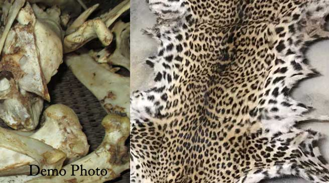 Assam Police arrested 4 Arunachal govt employees with leopard skin, bones